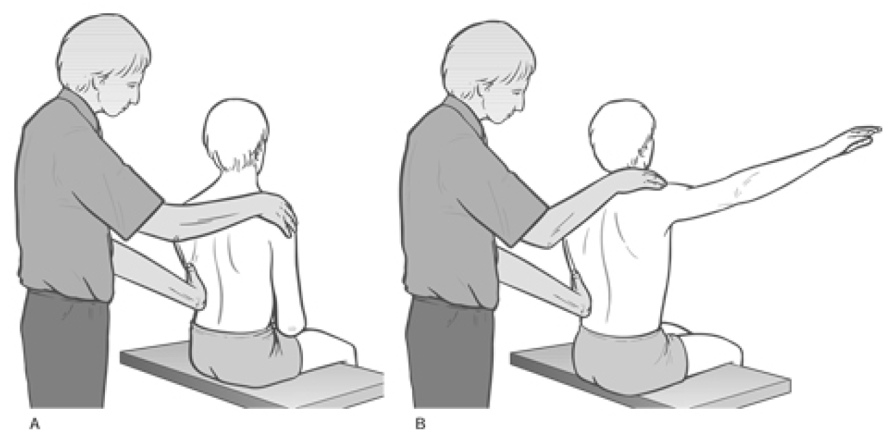 Figure 4 31 Palpation Assessment for Upper and Lower Fixators of the Shoulder Image 2