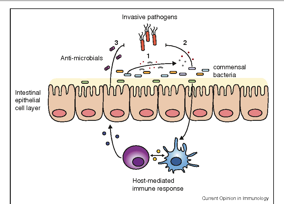 2-Figure1-1.png