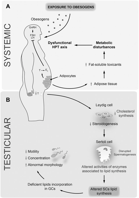 4-Figure1-1